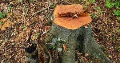 Ограбване на горите